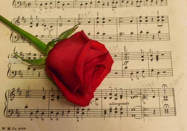 Photograph - For The Love Of Music by Garvin Hunter
