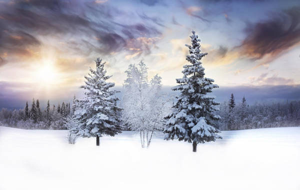 Winter Photograph - For The Love Of Winter by Amber Fite