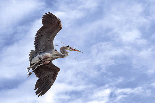 Photograph - For The Nest by Dale Kincaid