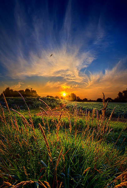 Photograph - For When The Day Began by Phil Koch