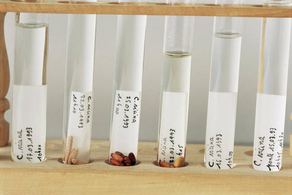 Test Of Time Photograph - Forensic Entomology Samples by Philippe Psaila/science Photo Library
