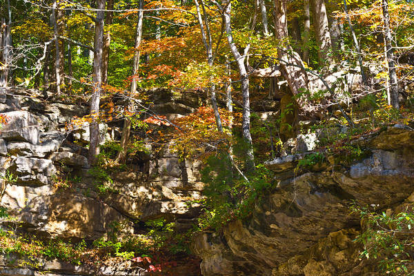 Photograph - Forest Above The Cave by Ed Gleichman