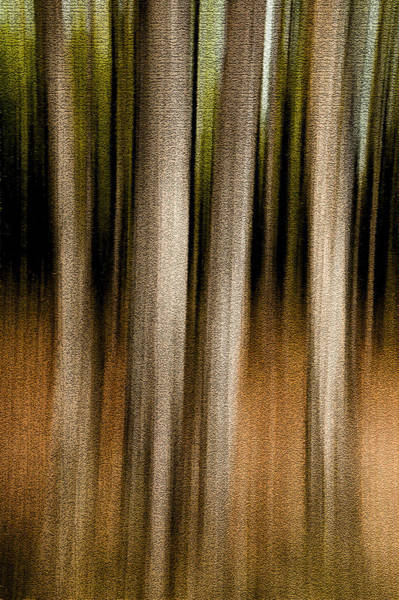 Photograph - Forest Abstract. Foursome by Rob Huntley