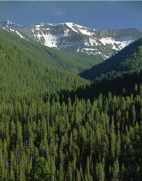Photograph - 209150-forest And Absaroka Range, Wy by Ed  Cooper Photography