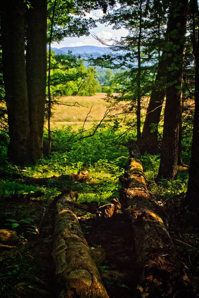 Photograph - Forest And Mountains by George Taylor