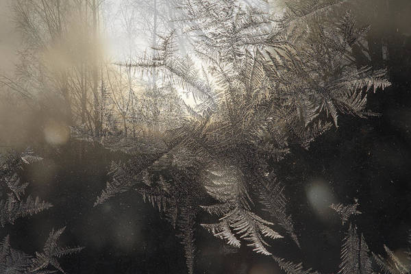Multiple Exposure Digital Art - Forest At Sunset Seen Through Frost Covered Window by Ulrich Kunst And Bettina Scheidulin