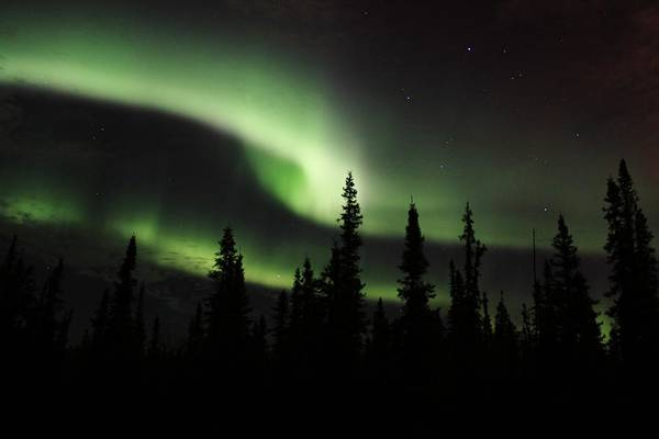 University Of Alaska Photograph - Forest Aurora by David Broome