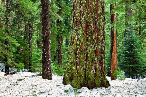 Photograph - Forest Beauty by Stuart Gordon