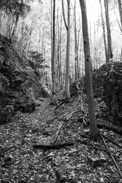 Wall Art - Photograph - Forest Black And White 1 by Falko Follert