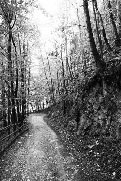 Wall Art - Photograph - Forest Black And White 10 by Falko Follert