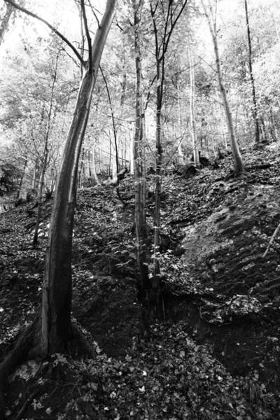Wall Art - Photograph - Forest Black And White 11 by Falko Follert