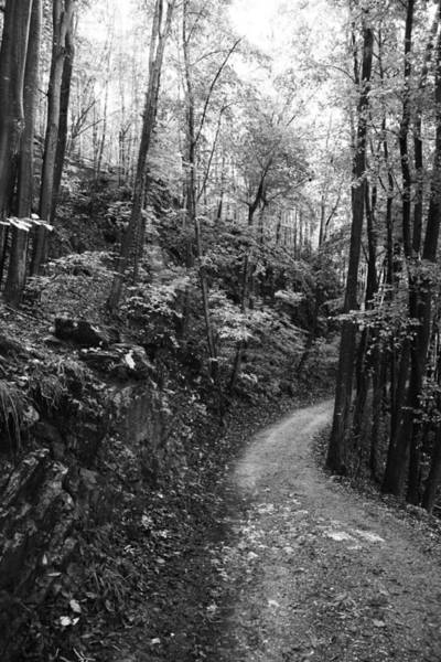 Wall Art - Photograph - Forest Black And White 12 by Falko Follert