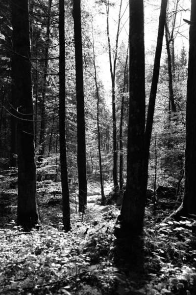 Forest Black And White 13 Art Print by Falko Follert