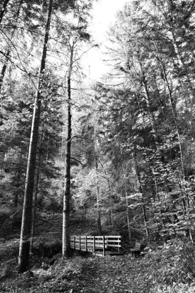 Wall Art - Photograph - Forest Black And White 14 by Falko Follert