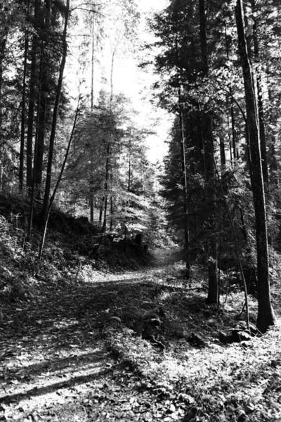 Wall Art - Photograph - Forest Black And White 15 by Falko Follert