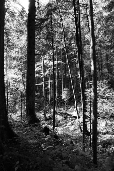 Wall Art - Photograph - Forest Black And White 16 by Falko Follert