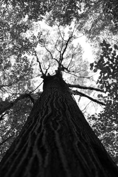 Wall Art - Photograph - Forest Black And White 17 by Falko Follert