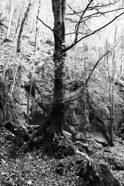 Wall Art - Photograph - Forest Black And White 2 by Falko Follert
