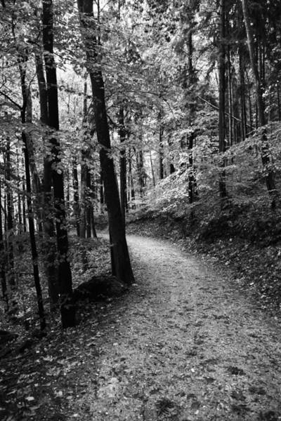 Wall Art - Photograph - Forest Black And White 3 by Falko Follert