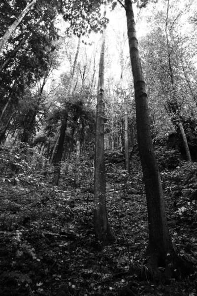 Wall Art - Photograph - Forest Black And White 4 by Falko Follert