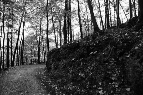 Wall Art - Photograph - Forest Black And White 5 by Falko Follert