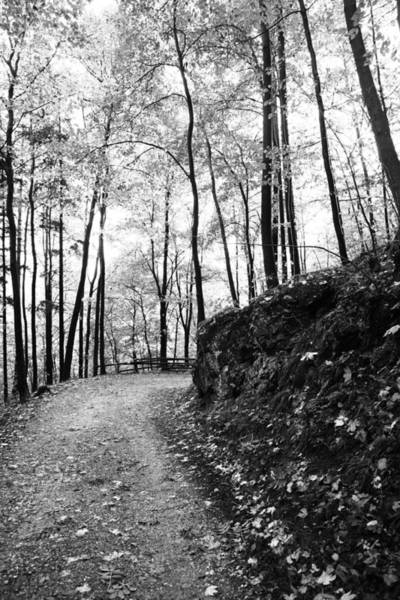 Wall Art - Photograph - Forest Black And White 6 by Falko Follert