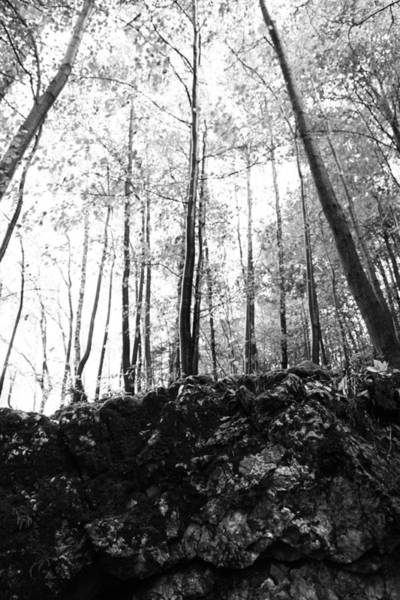 Wall Art - Photograph - Forest Black And White 7 by Falko Follert