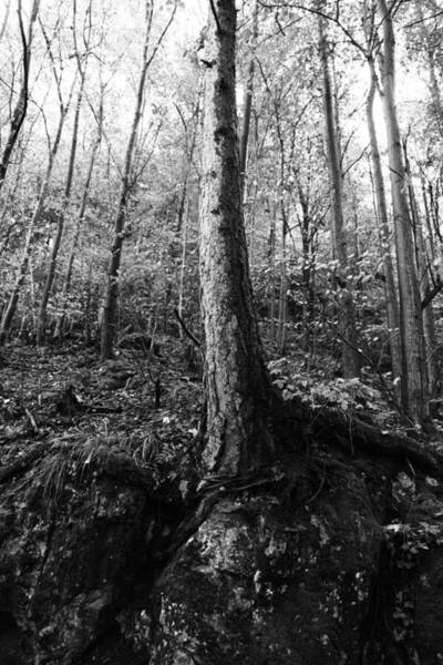 Wall Art - Photograph - Forest Black And White 8 by Falko Follert