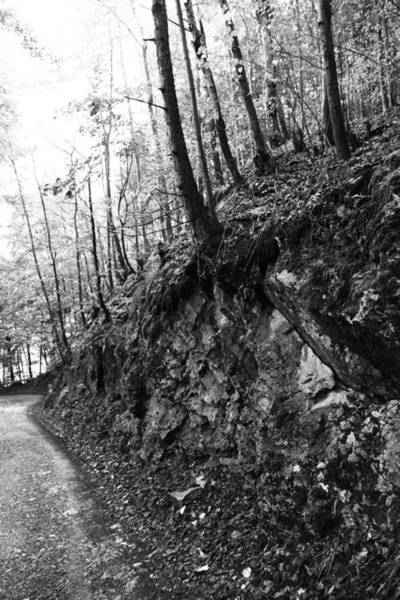 Wall Art - Photograph - Forest Black And White 9 by Falko Follert