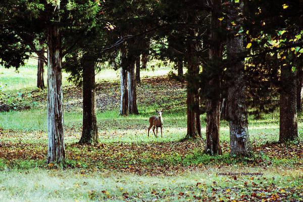 Digital Art - Forest Buck by Lorna R Mills DBA  Lorna Rogers Photography