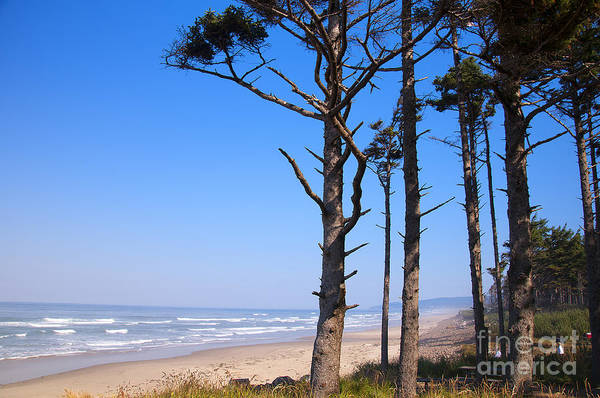 Photograph - Forest By The Sea by Brenda Kean