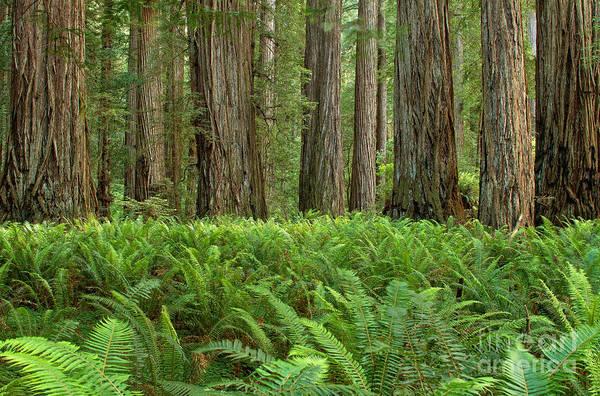 Photograph - Forest Contrasts by Stuart Gordon