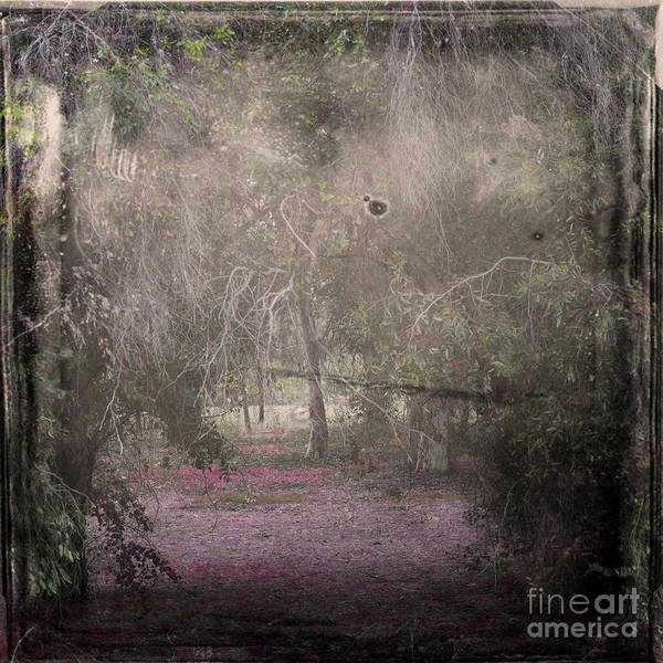 Wall Art - Photograph - Forest Dream by Stelios Kleanthous