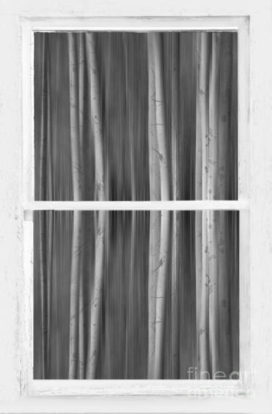 Photograph - Forest Dream Through White Rustic Distressed Window Bw by James BO Insogna
