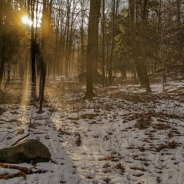 Photograph - Forest Dreams by Chris Bordeleau