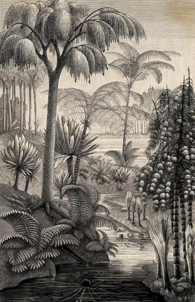 Meyer Wall Art - Photograph - Forest During The Carboniferous Period by Universal History Archive/uig
