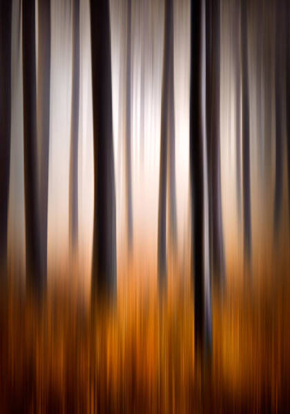 Backwoods Wall Art - Photograph - Forest Essence Abstract Autumn Landscape by Dave Allen