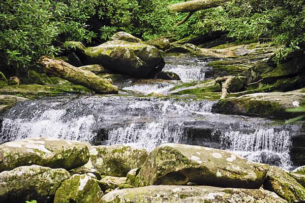 Photograph - Forest Falls by Christi Kraft