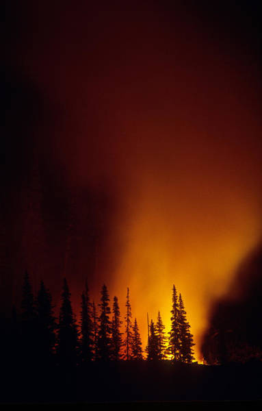 Wall Art - Photograph - Forest Fire At Night by Thomas And Pat Leeson