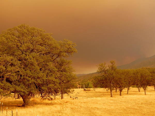 Photograph - Forest Fire Smoke Oak Trees by Jeff Lowe