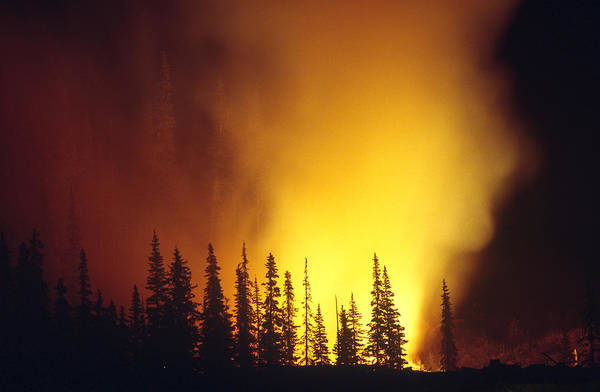 Wall Art - Photograph - Forest Fire by Thomas And Pat Leeson