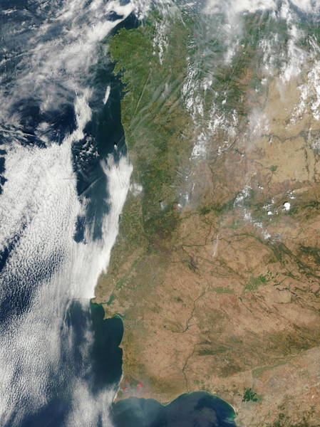 Nation Photograph - Forest Fires by Nasa/science Photo Library