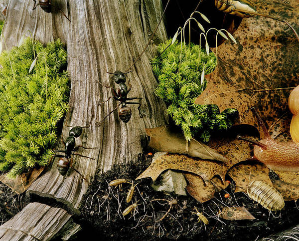 Arthropods Painting - Forest Floor by Chase Studio