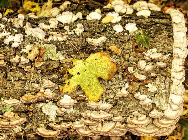 Photograph - Forest Floor by Frank Winters