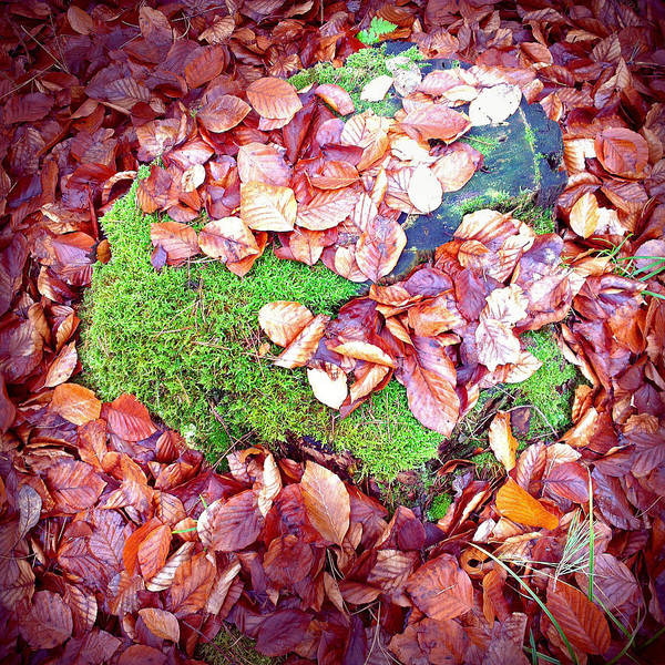 Brown Wall Art - Photograph - Forest Floor In Fall Brown Foliage Green Moss  by Matthias Hauser