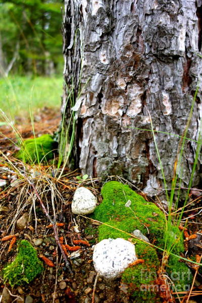 Photograph - Forest Floor by Jacqueline Athmann
