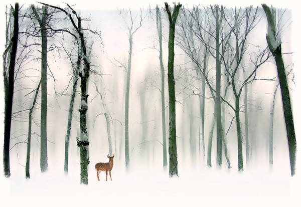 Winter Deer Photograph - Forest Friend by Jessica Jenney