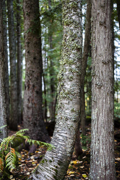 Photograph - Forest Friends by Fran Riley