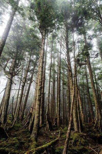 Queen Charlotte Islands Wall Art - Photograph - Forest by Glenn Sundeen - Tigerpal
