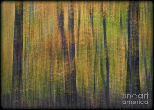 Photograph - Forest Glow by Susan Candelario